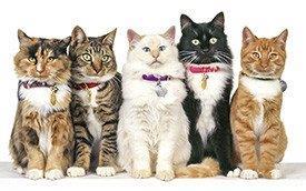 Gatos várias raças