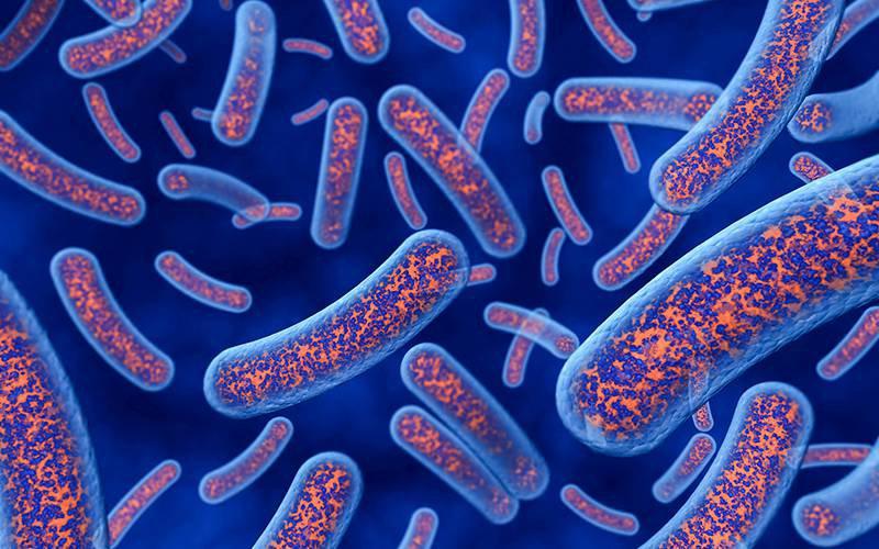 Bactérias intestinais podem ser chave no tratamento de doença autoimune | INDICE.eu - Toda a Saúde